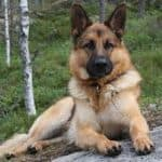 Dogs Are Associated with the Sign of Leo