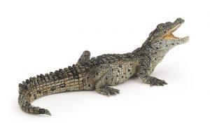 Capricorn - the gentle crocodile